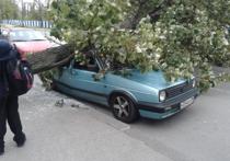 Десятки деревьев падают: в Калининградскую область пришел разрушительный шторм