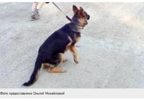 Между двумя калининградскими семьями развернулись нешуточные баталии за собаку