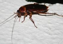 Жительница Подмосковья судится из-за таракана в котлете